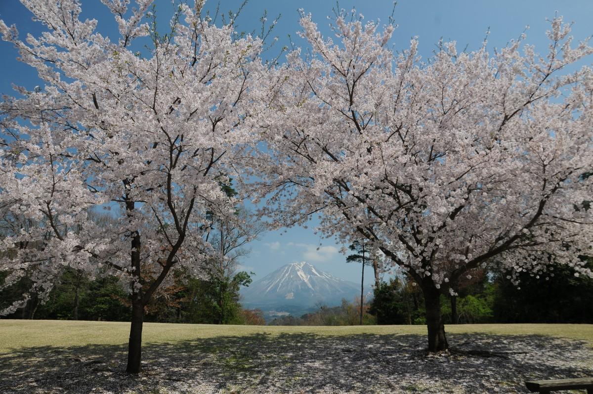 벚꽃 개화 시기 및 꽃놀이 장소 안내