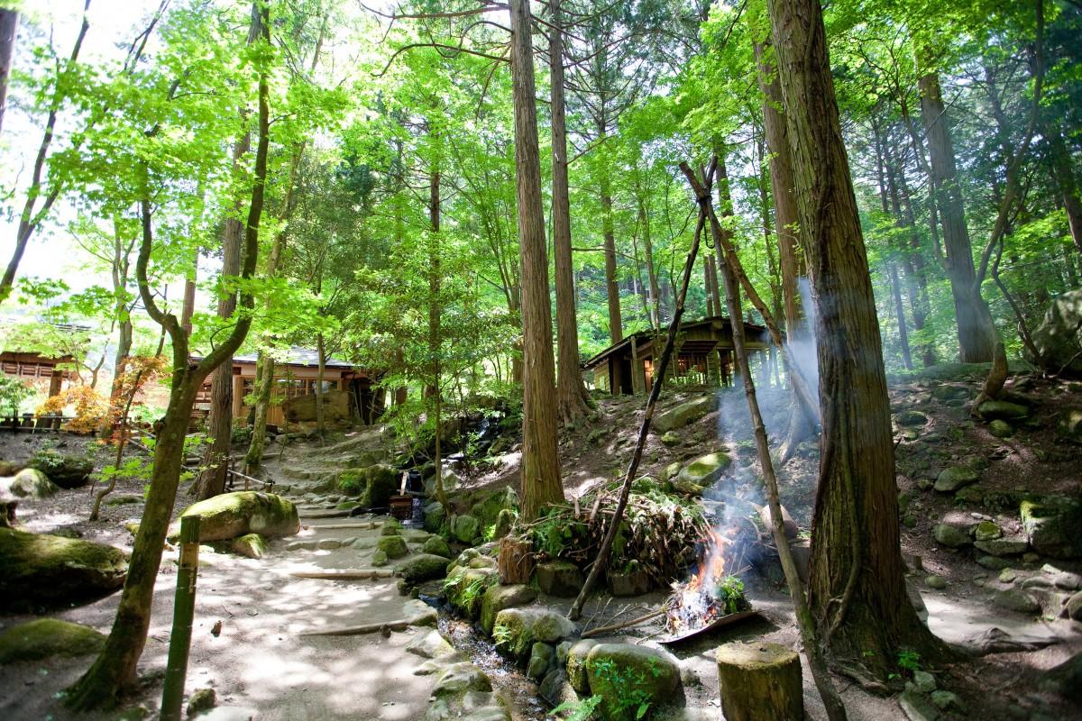 สวนผักภูเขา ซังไซเรียวริ มิตาขิ เอ็น