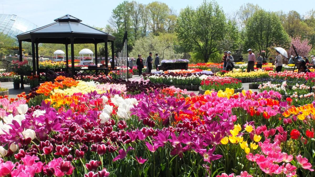 สวนดอกไม้ทตโตะริฮานะไคโระ